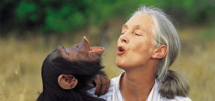 Jane Goodall made a career out of her shocking relationship with chimpanzees.
