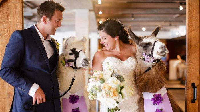 These animals sure knew how to photo bomb this wedding picture.