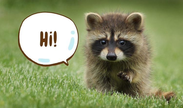 Baby raccoon saying hi in the grass