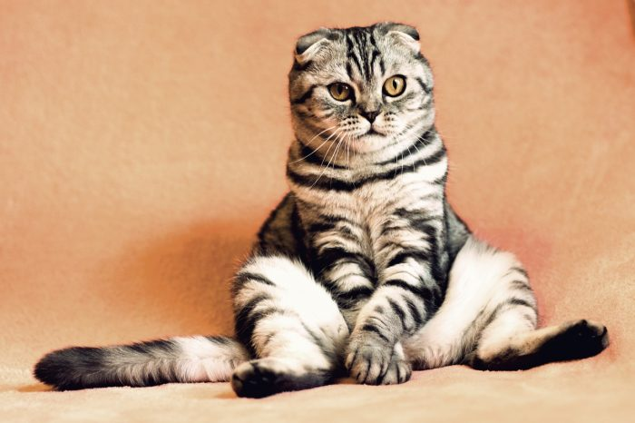 Pets sometimes act like people. This cat looks like it's holding its bladder.