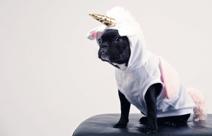 This dog is dressed like a unicorn, but it sure is adorable!
