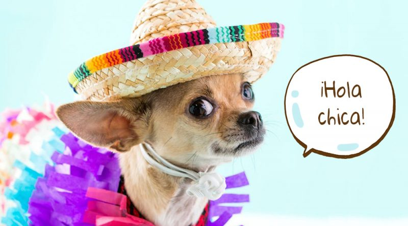Chihuahua dressed up in a costume.