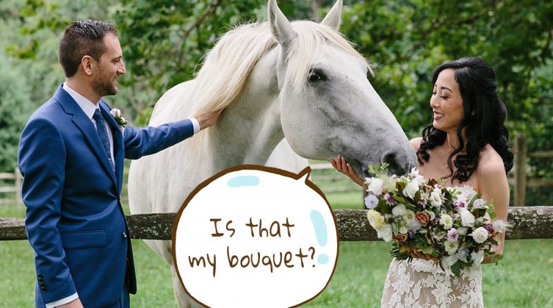 That horse really wants a bouquet